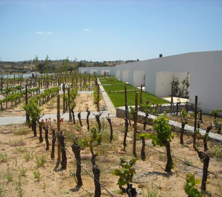 land-vineyards1