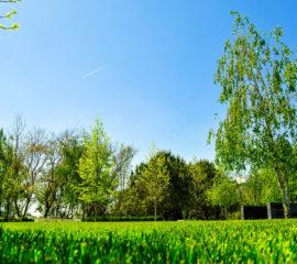 Jardim: Tarefas Essenciais para o Início da Primavera