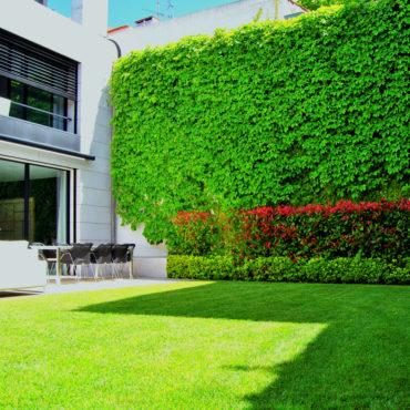 Tarefas essenciais para cuidar do seu jardim no verão