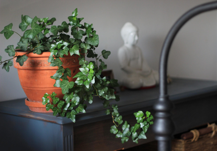 O Jardim Interior Zen